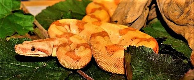 金蛇精のイメージ画像